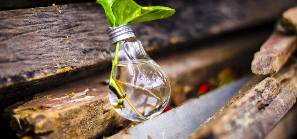 Light bulb containing a green leaf placed on pieces of wood.