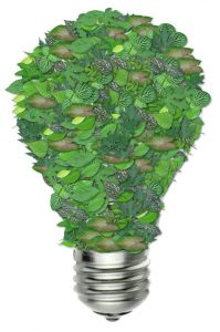 Bulb shaped by green leaves